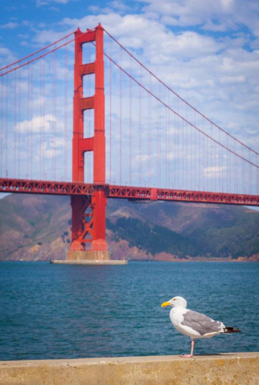 Golden Gate Bridge w/Seagull